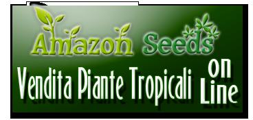 Amazon Seeds