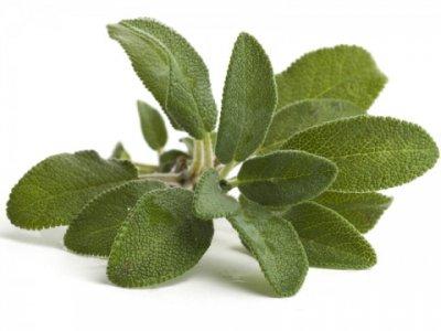 Olio essenziale di Salvia BIO Dacor