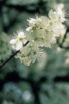 Cherry Plum - paura di impazzire, di perdere il controllo