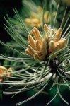 Pine - senso di colpa